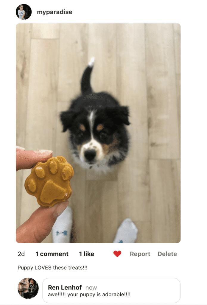 coconut homemade dog treats