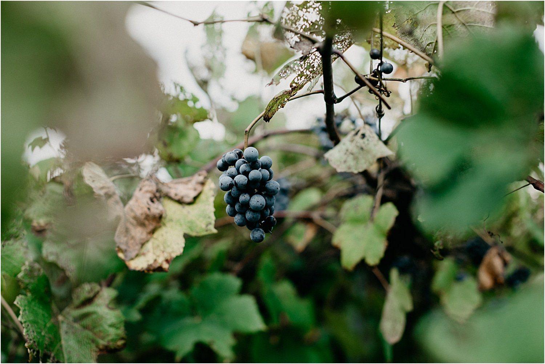 Virginia Dog Friendly Wineries