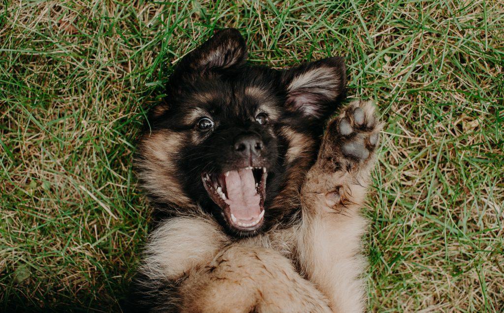 wi state parks dog friendly