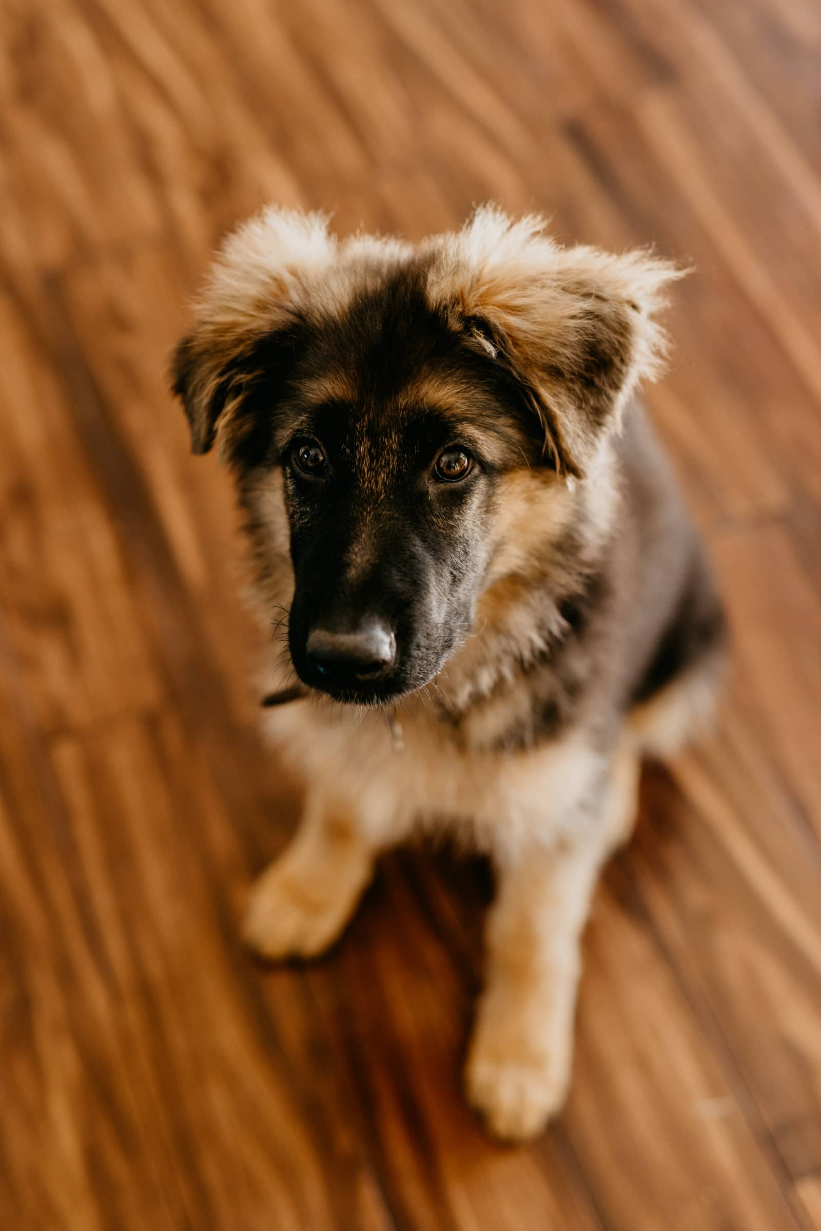 House Fur Dog Blog
