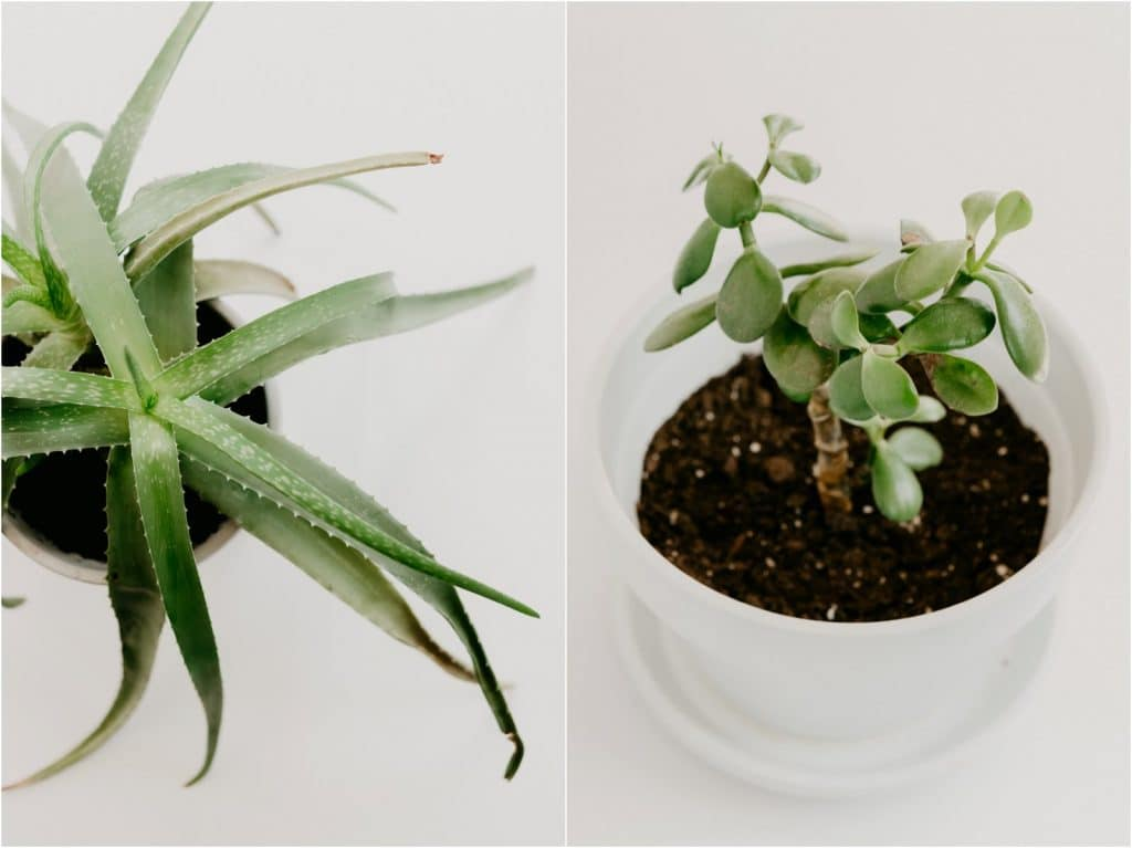easiest care houseplants