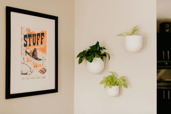 Tips for Fertilizing Your Houseplants