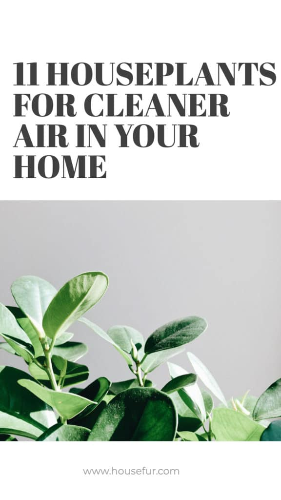11 houseplants for clean air in your home