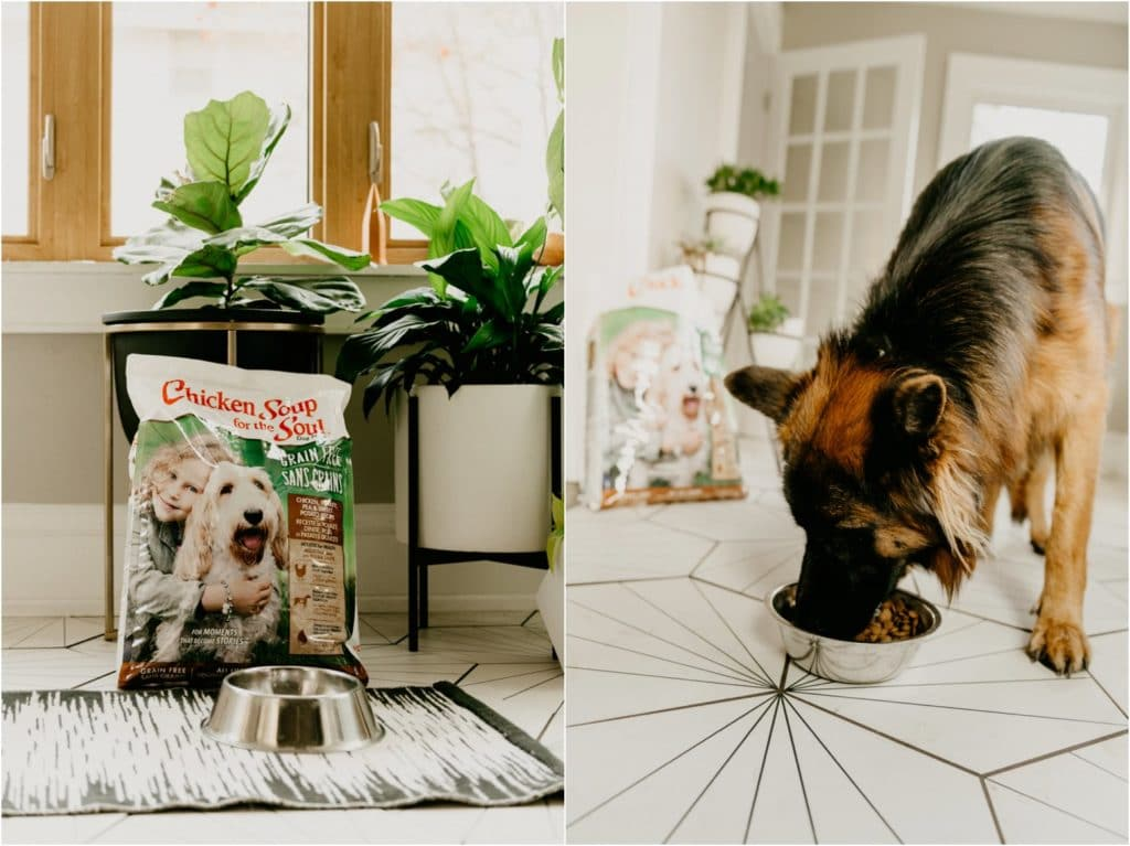 CHICKEN SOUP FOR THE SOUL DOG FOOD + TREAT GIVEAWAY