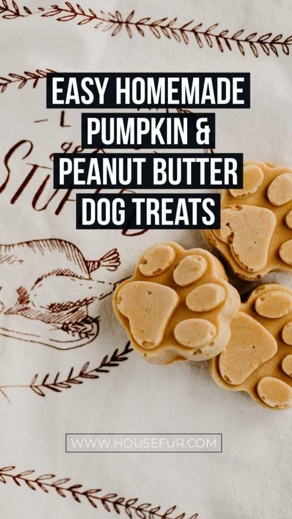 healthy homemade pumpkin dog treats