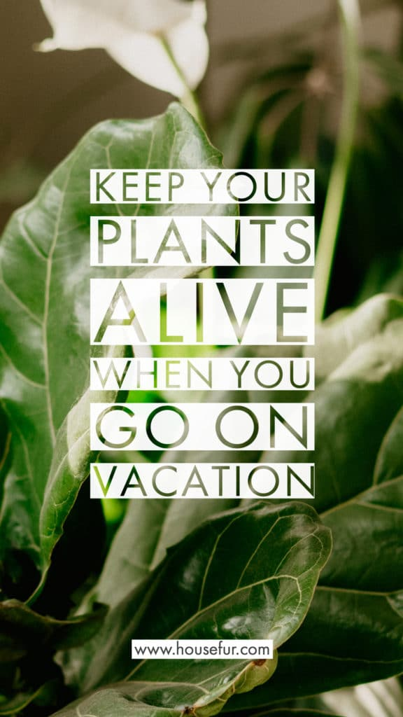 keep your houseplants alive when you are traveling or on vacation
