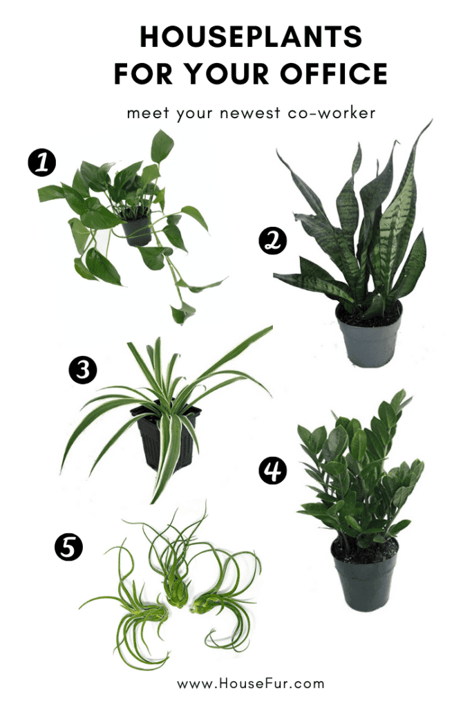 houseplants for your office