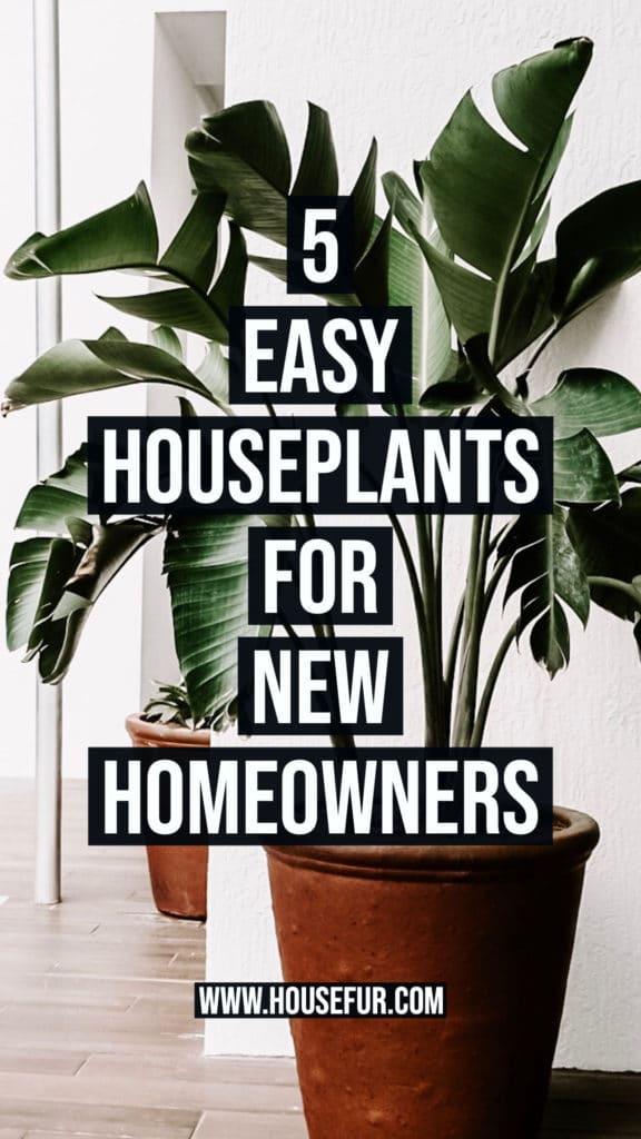 5 easy to care for houseplants for new homeowners
