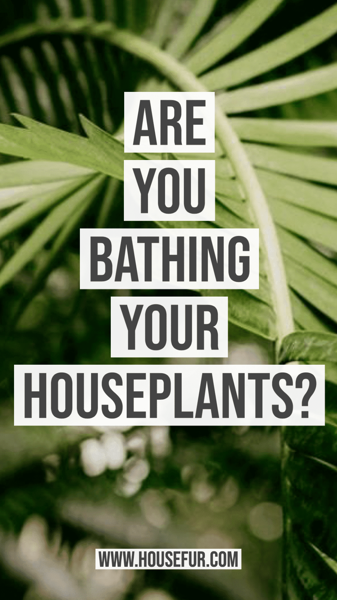 Are You Bathing Your Houseplants?
