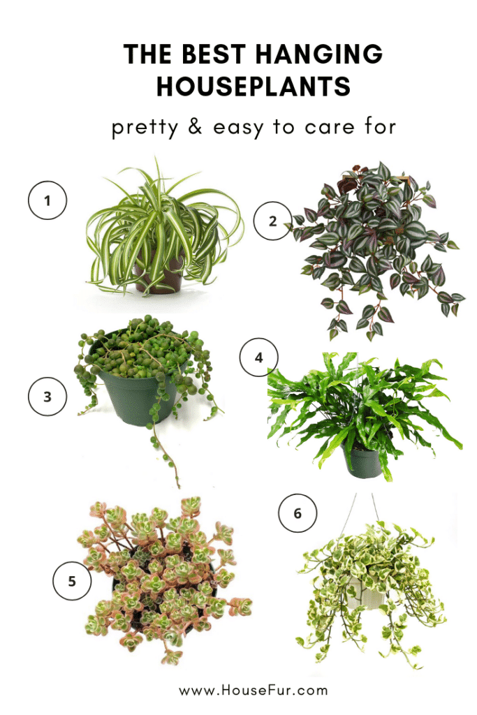 Hanging Houseplants You Ll Wanna Hang Out With House Fur