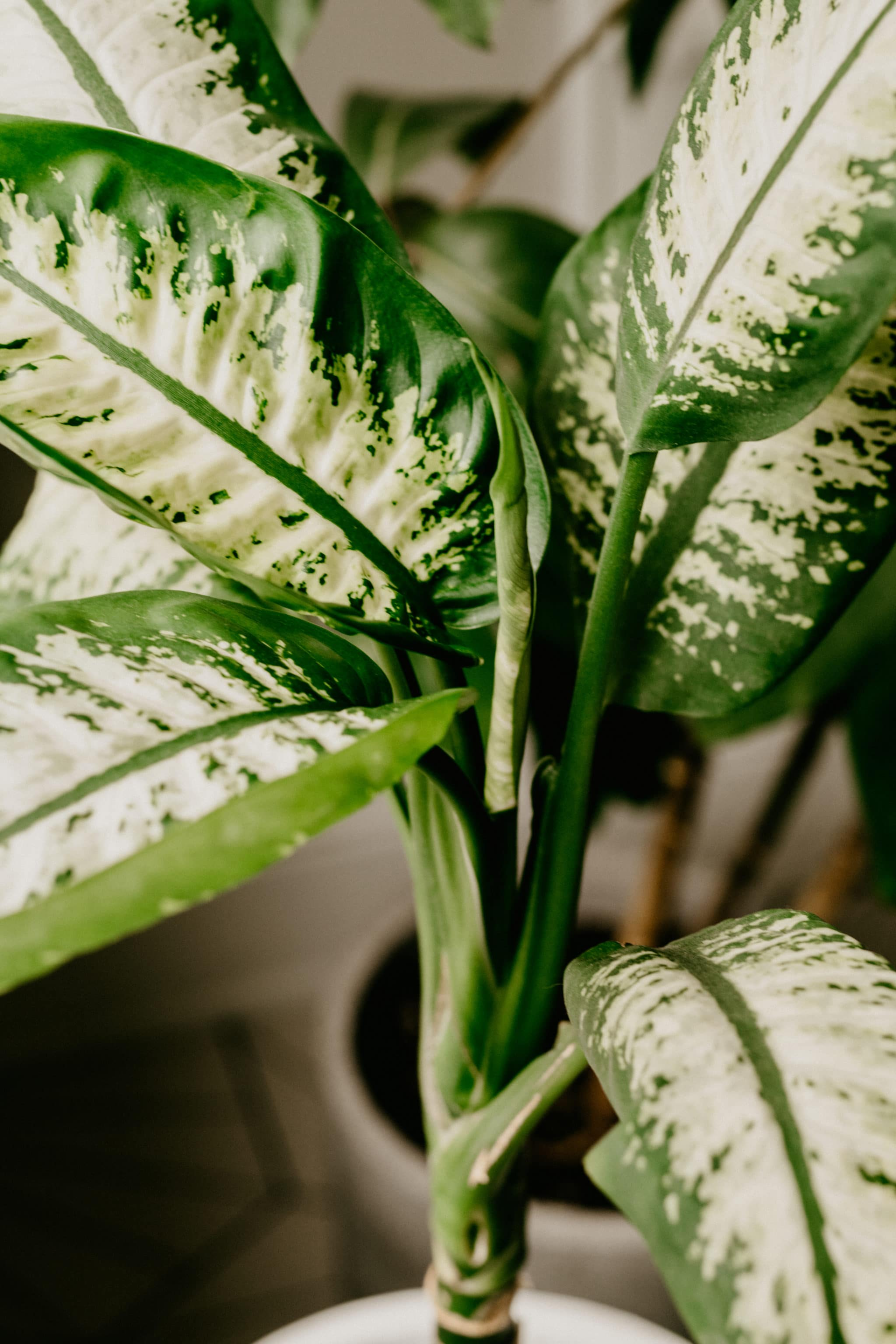 cleaning houseplants