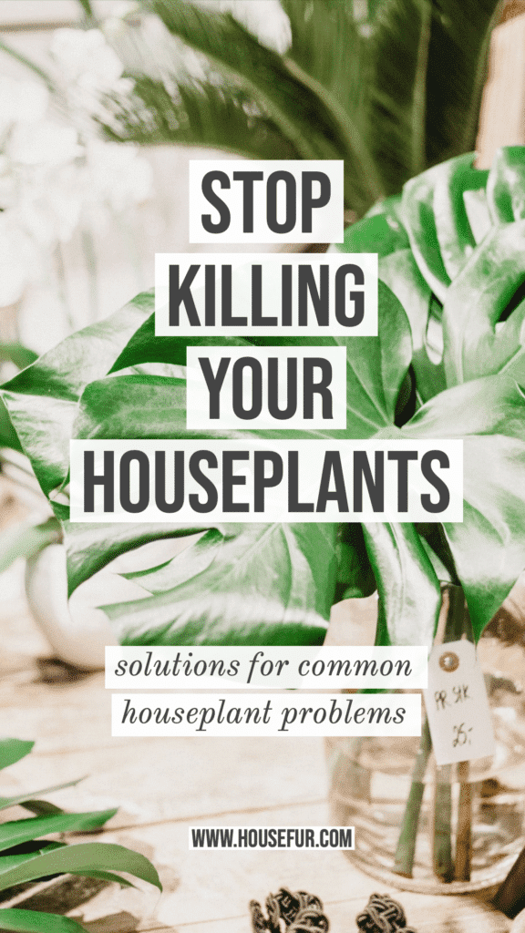solutions to stop killing your houseplants