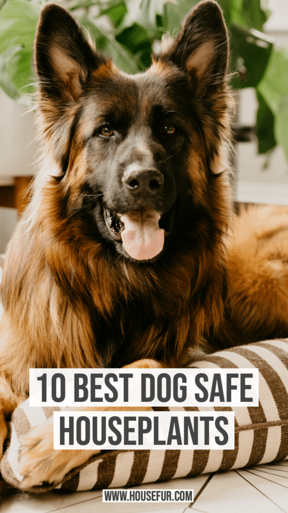 houseplants that are safe for dogs