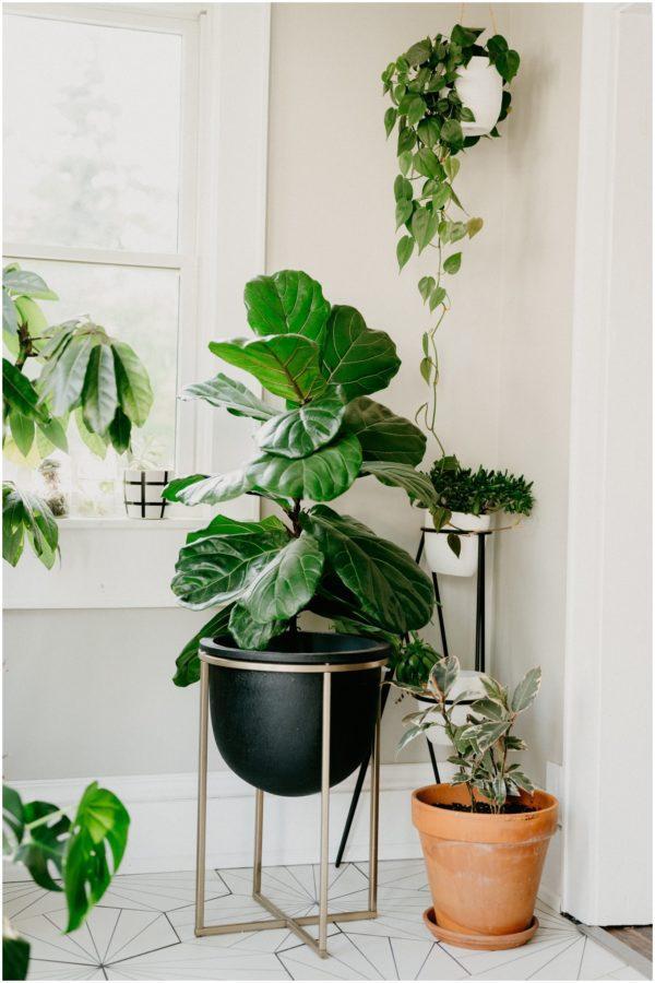 coffee for houseplants