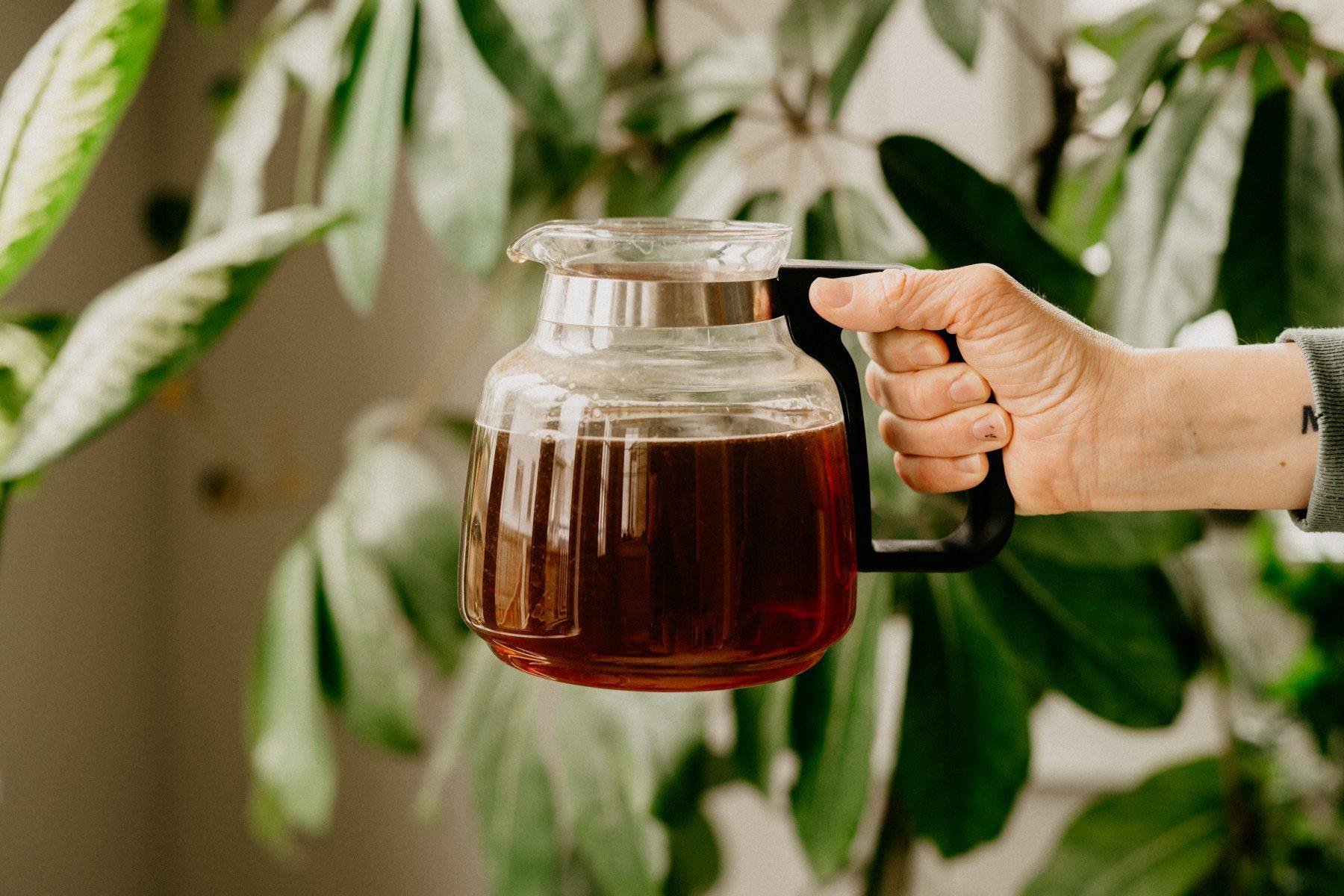 leftover coffee for houseplants