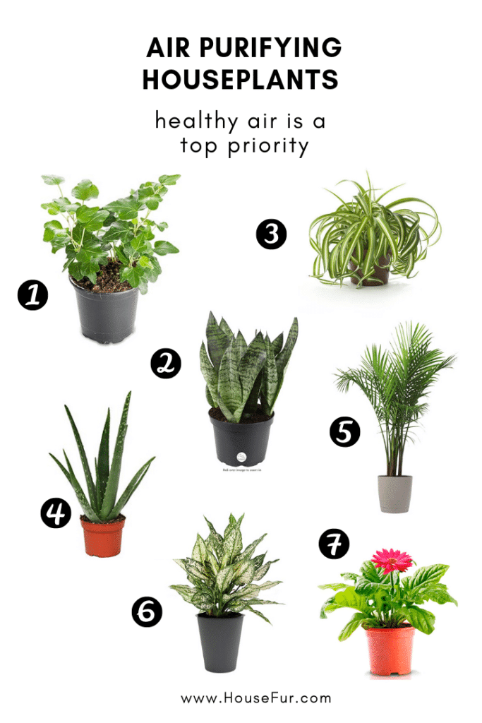 air purifying houseplants cleaner air