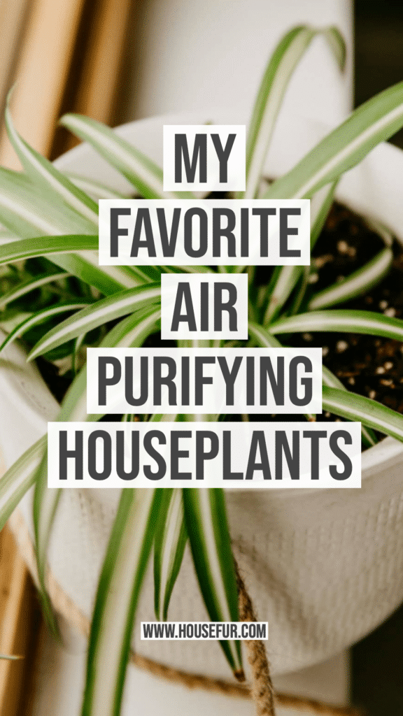 my favorite air purifying houseplants