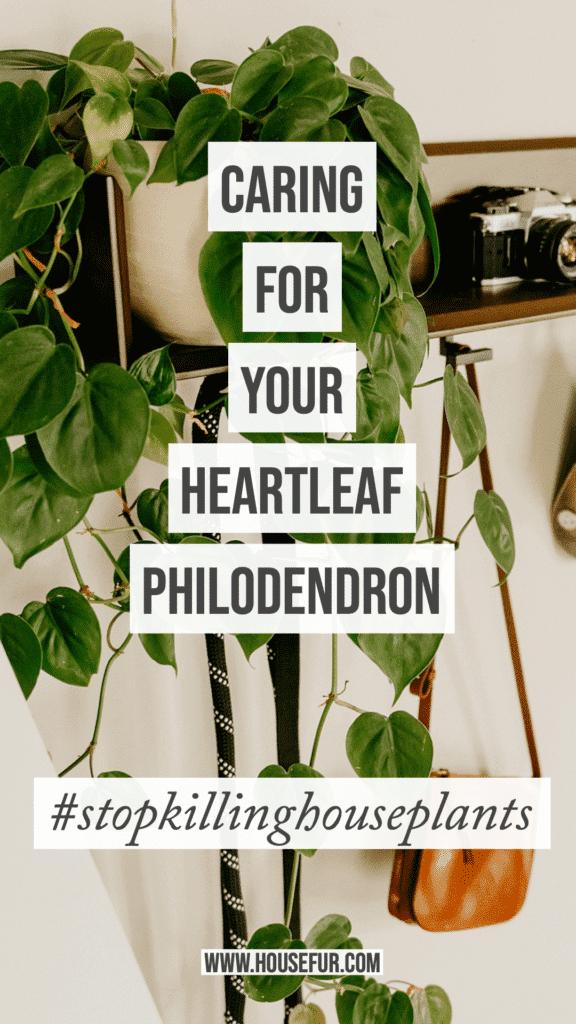 keep your houseplants alive