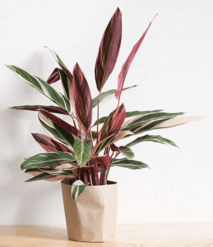 6 Rare Houseplants You Didn T Even Know You Wanted House Fur