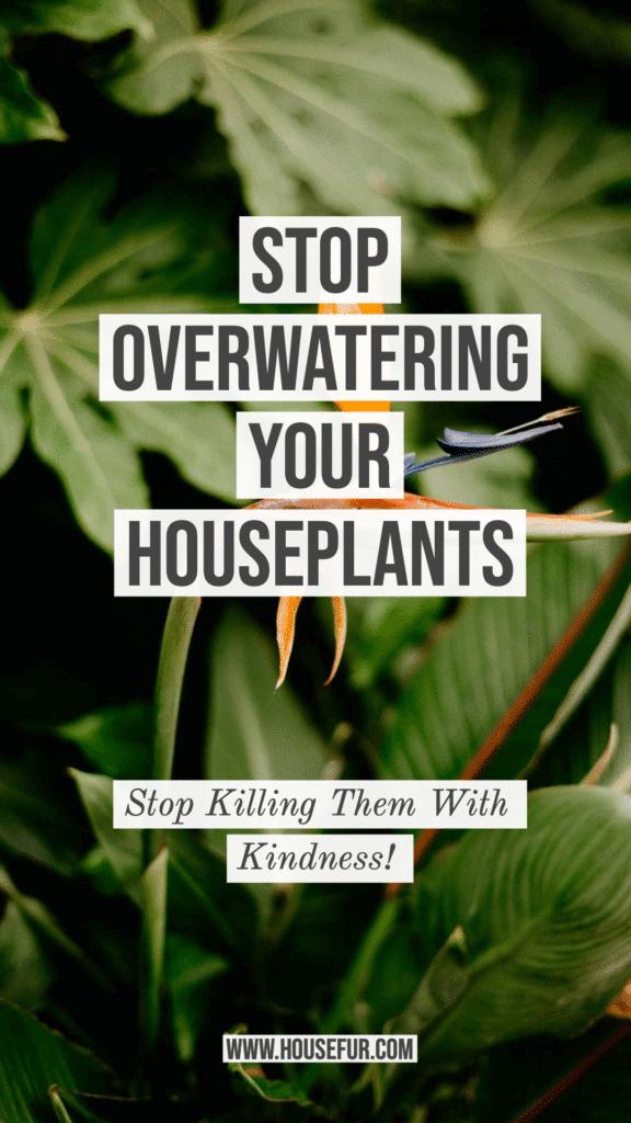 STOP Overwatering Your Houseplants