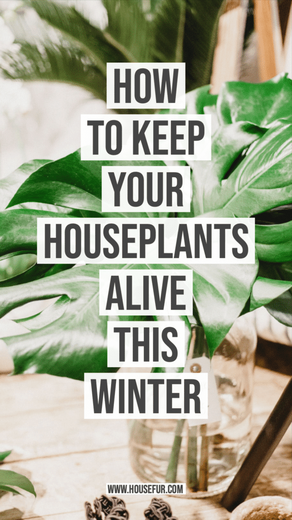 How to Keep Your Houseplants Alive This Winter