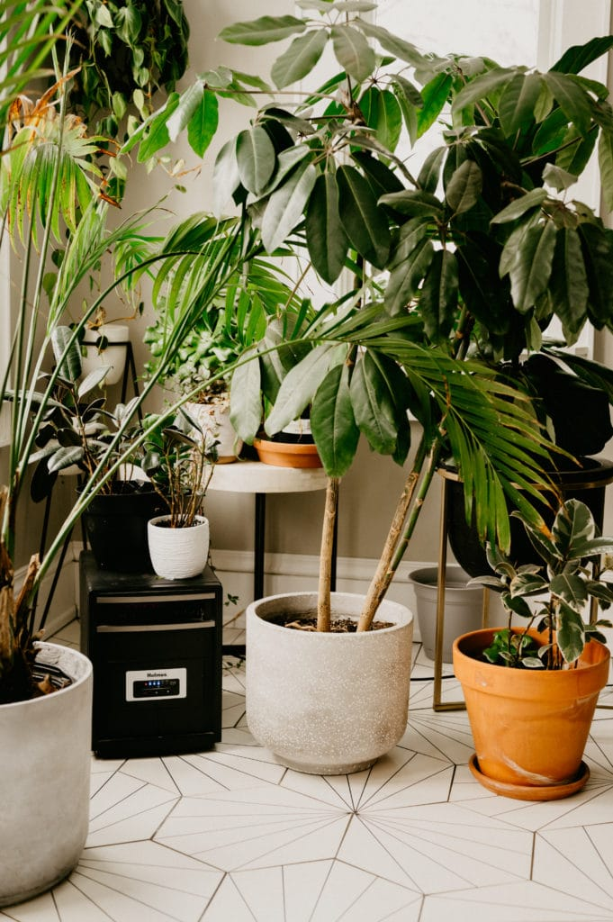 space heater for winter houseplant care