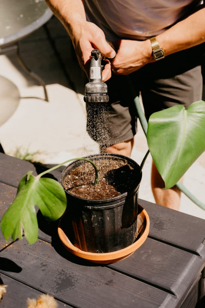 how to propagate your monstera houseplant