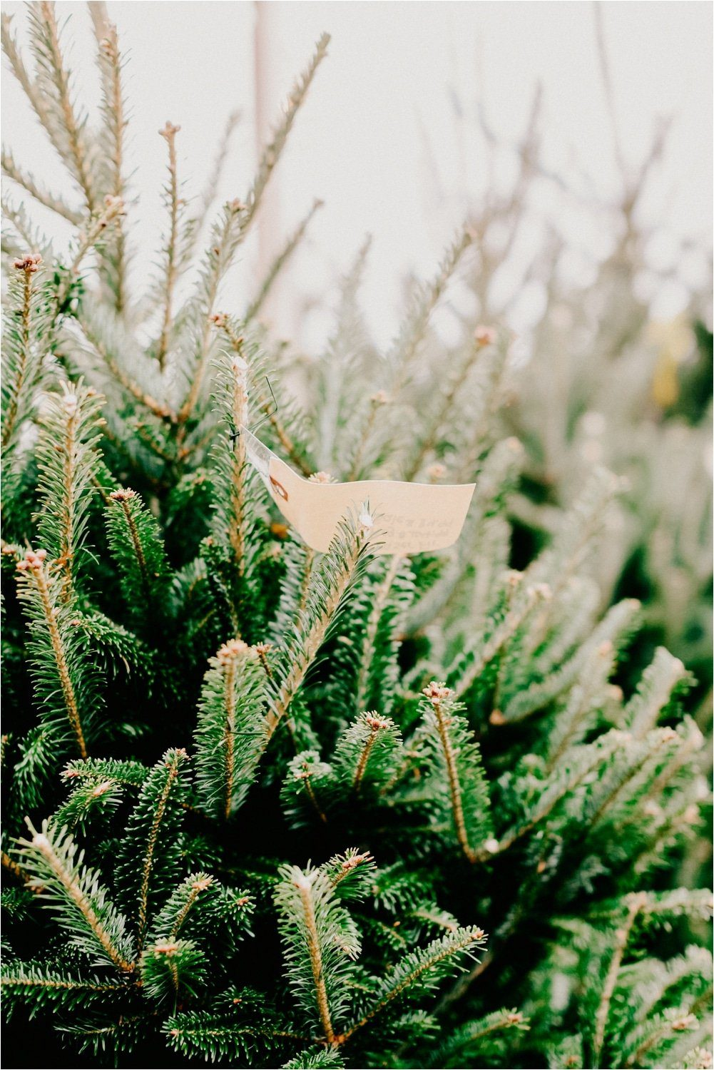 how to keep your christmas tree alive longer