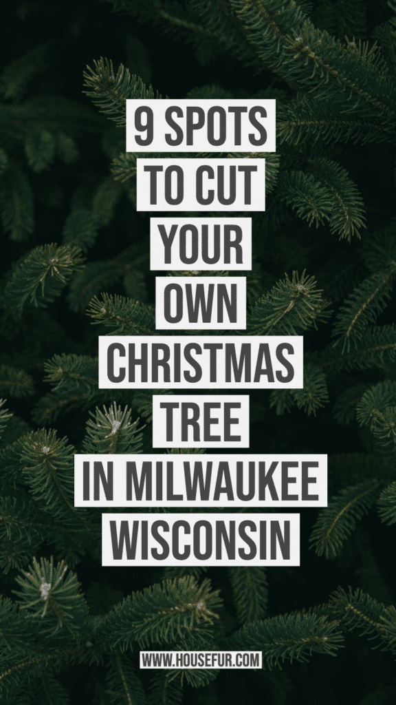 9 Spots to Cut Your Own Christmas Tree in Milwaukee Wisconsin