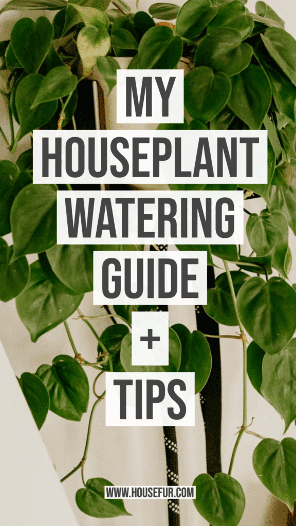 Houseplant Watering Guide