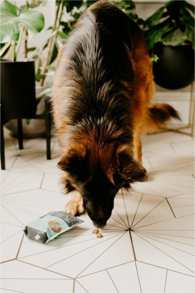 Jiminy's dog treats