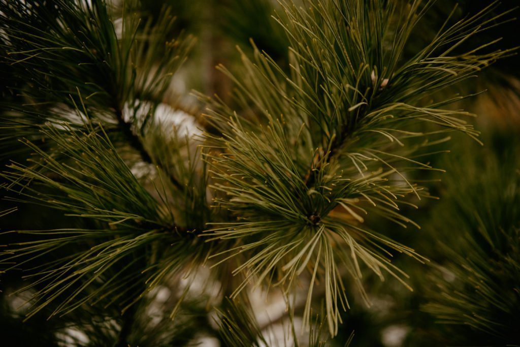 wisconsin cut your own christmas tree
