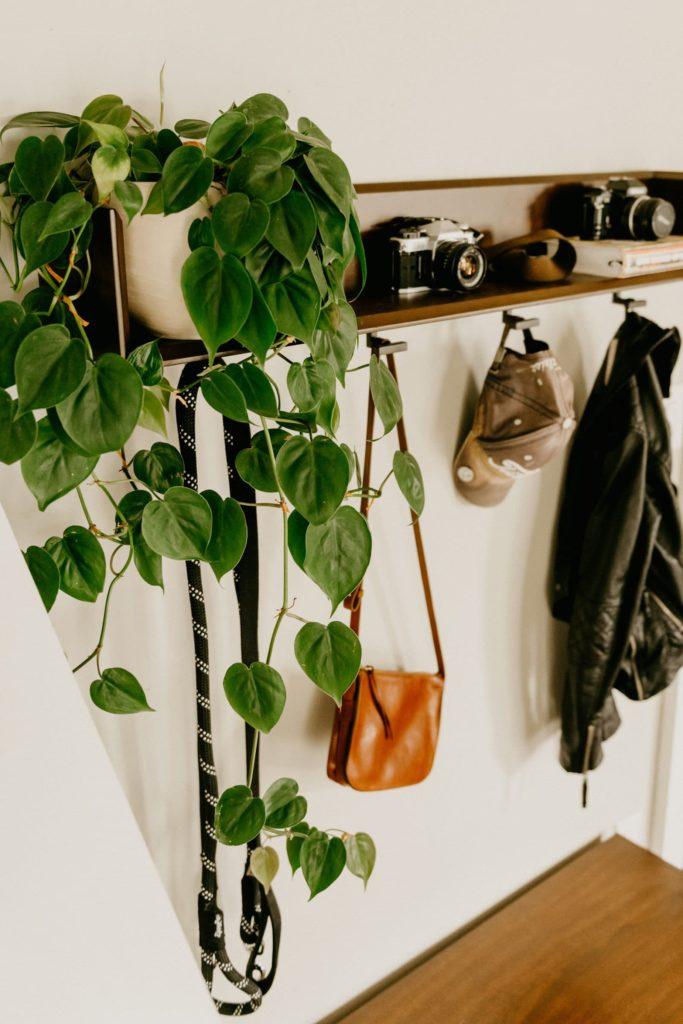 houseplant watering guide