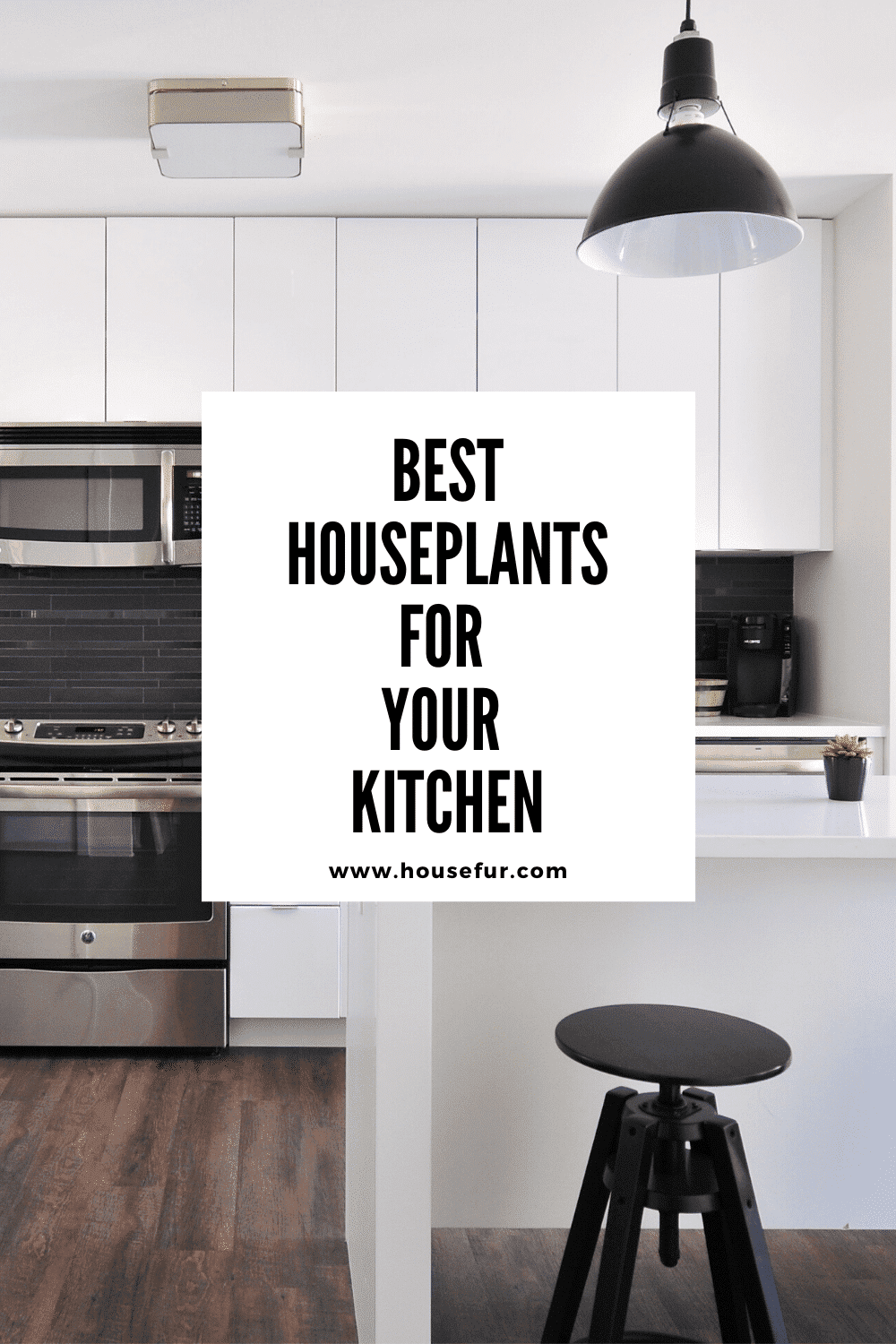 Best Houseplants for your kitchen