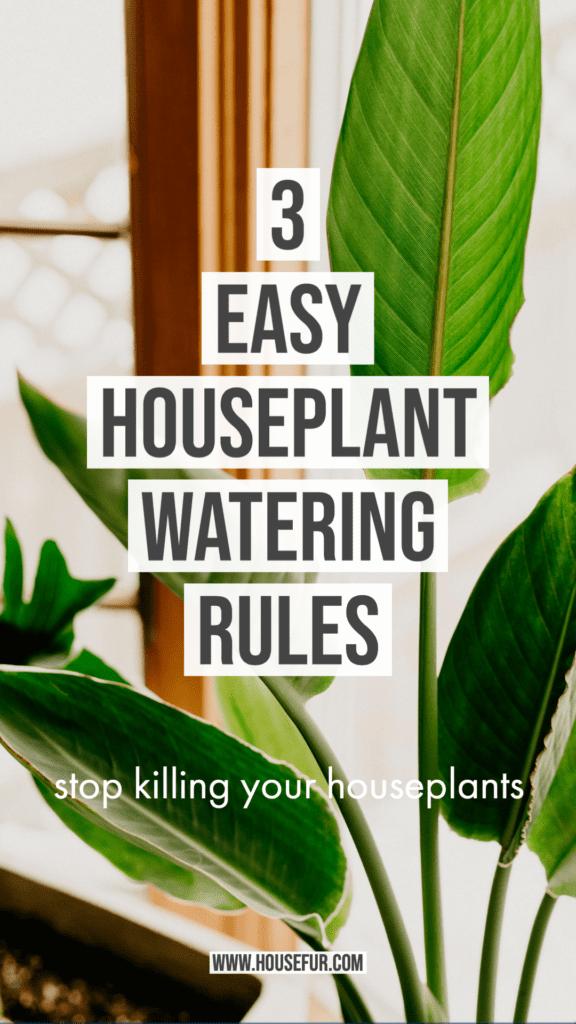3 easy Houseplant Watering Rules