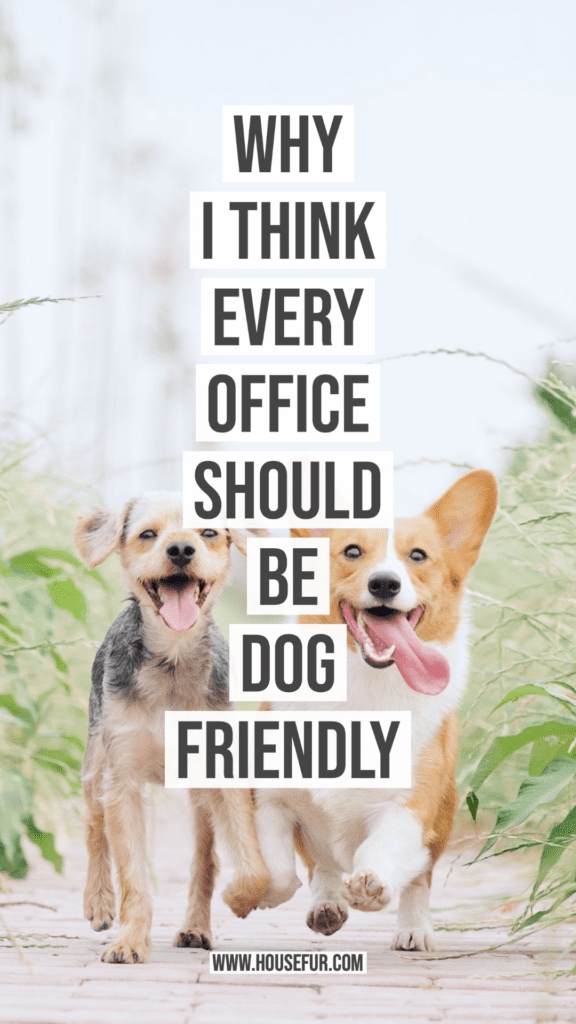 why I think office should be dog friendly
