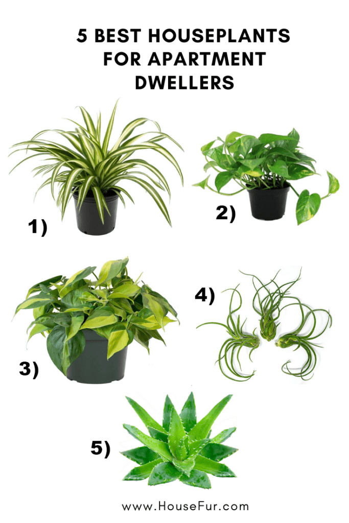 5 best houseplants for apartment dwellers