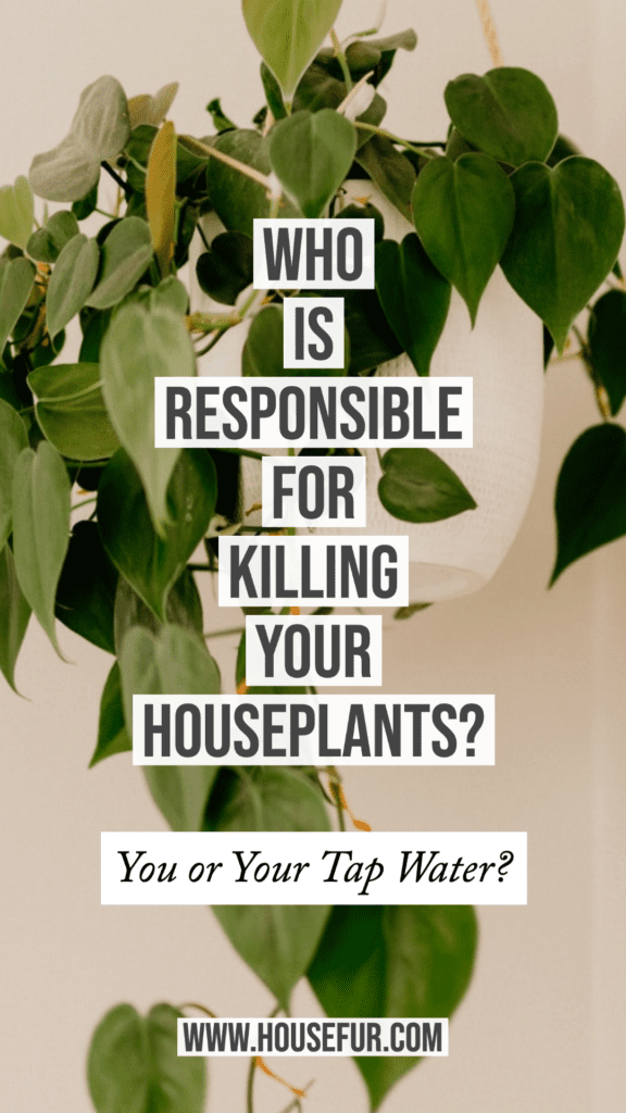 Who Is Responsible for Killing Your Houseplants?
