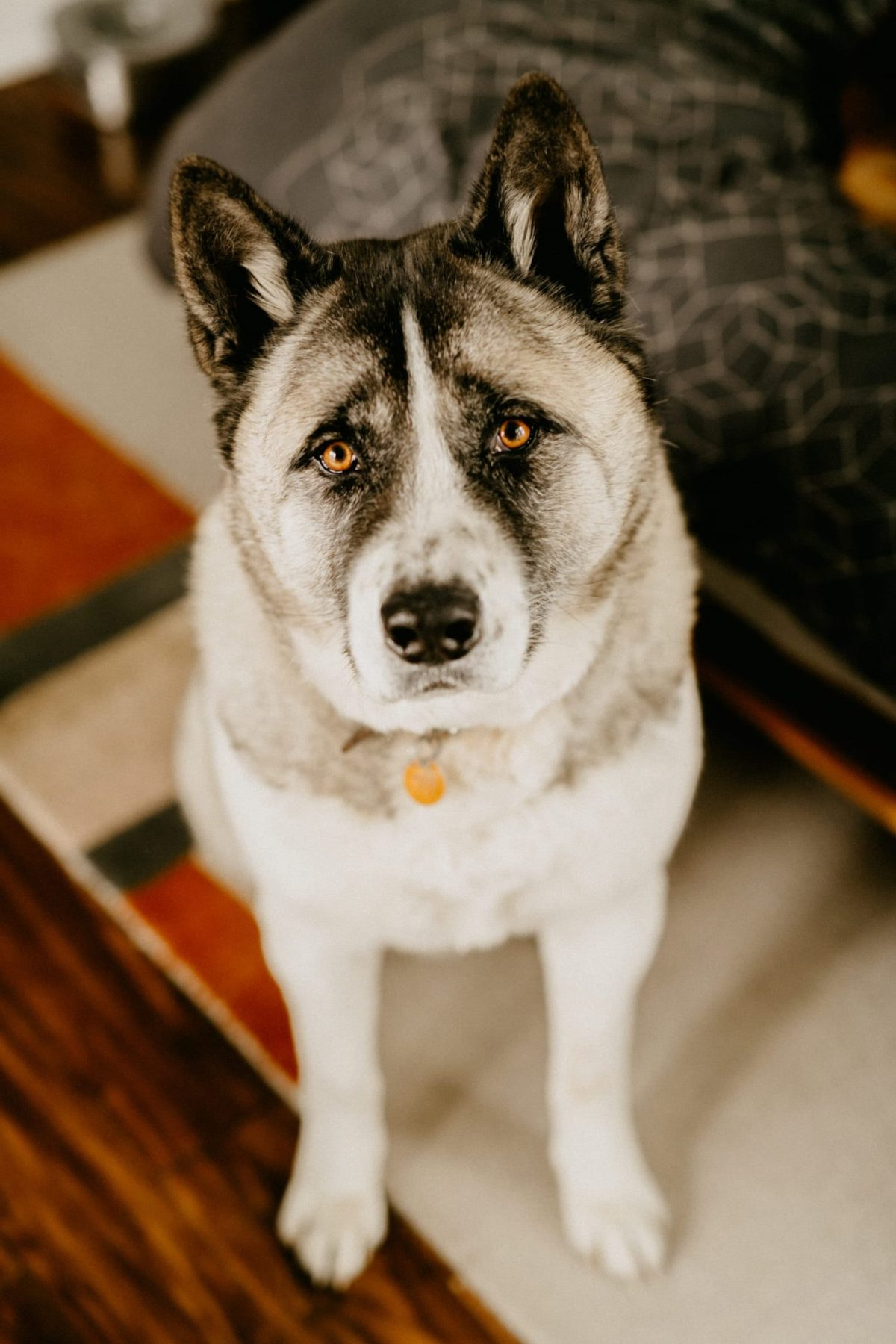 clean rugs for dog owners