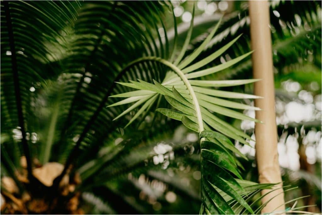 milwaukee domes tropical dome