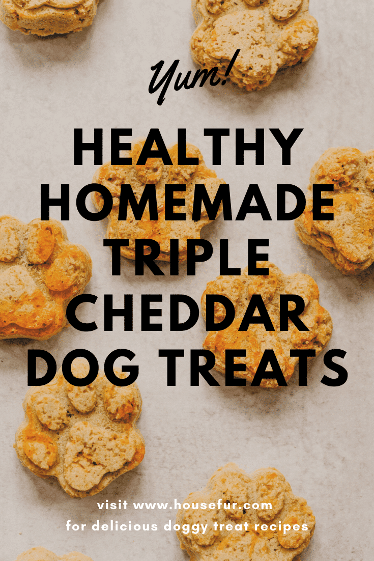 homemade cheddar cheese dog treats