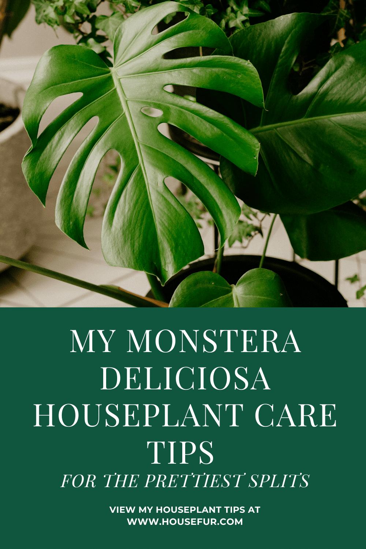My Monstera Deliciosa Houseplant Care Tips