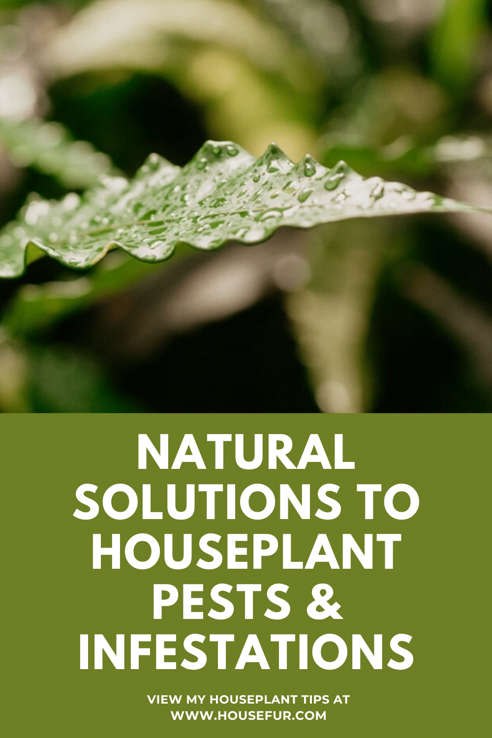 Natural and Cheap Ways to Deal With Houseplant Pests and Infestations