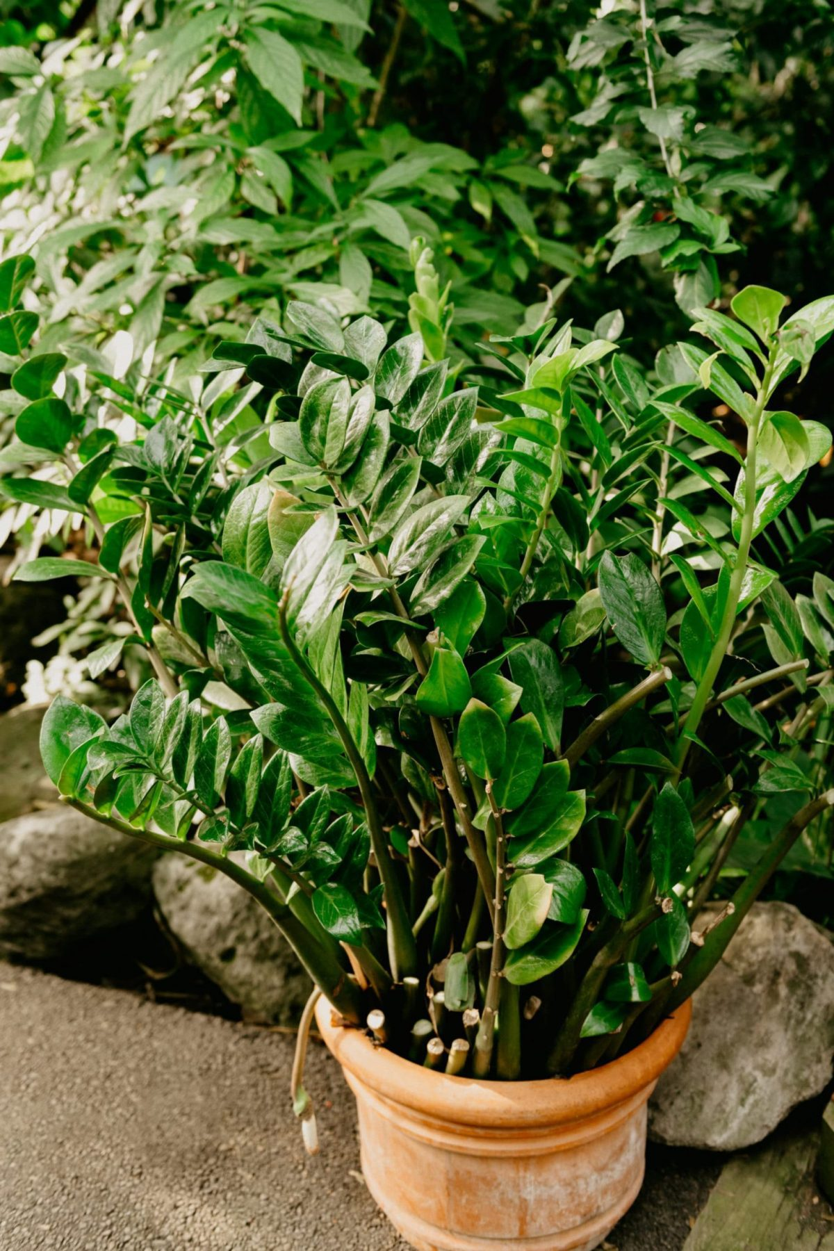 Humidity for winter houseplant care