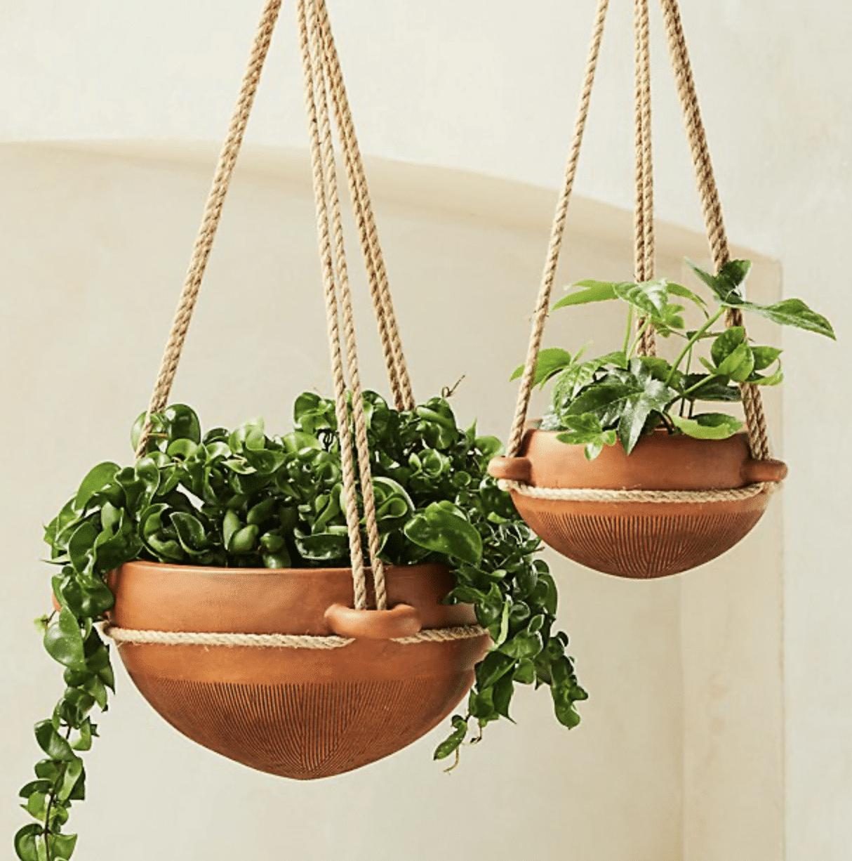 salvador hanging planter