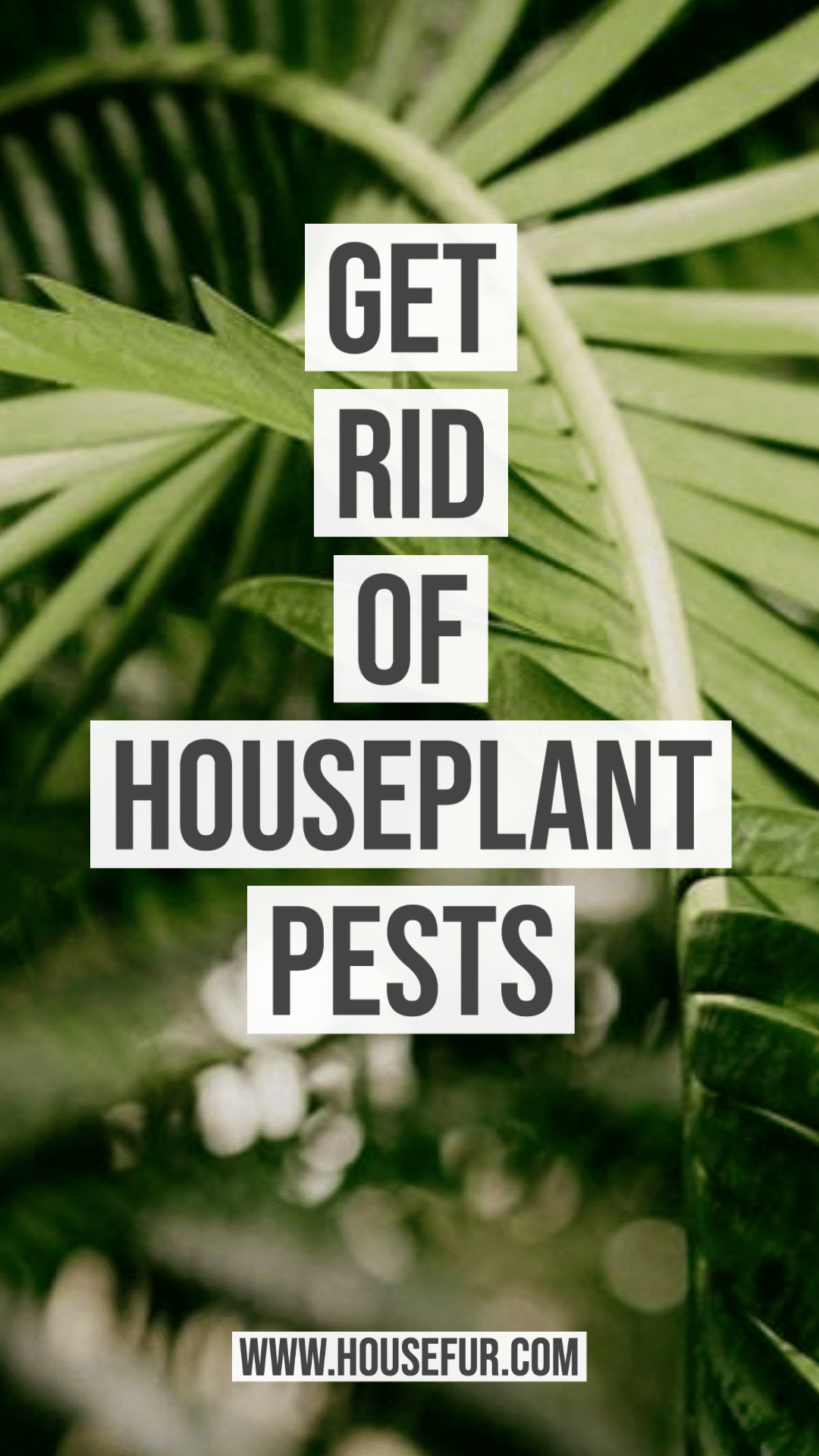 get rid of houseplant pests