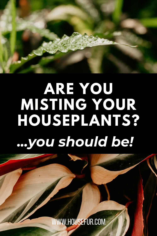 mist houseplants