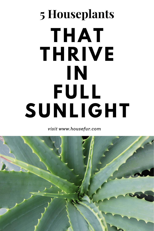 full sunlight houseplants