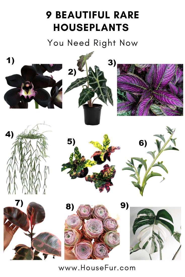9 rare houseplants