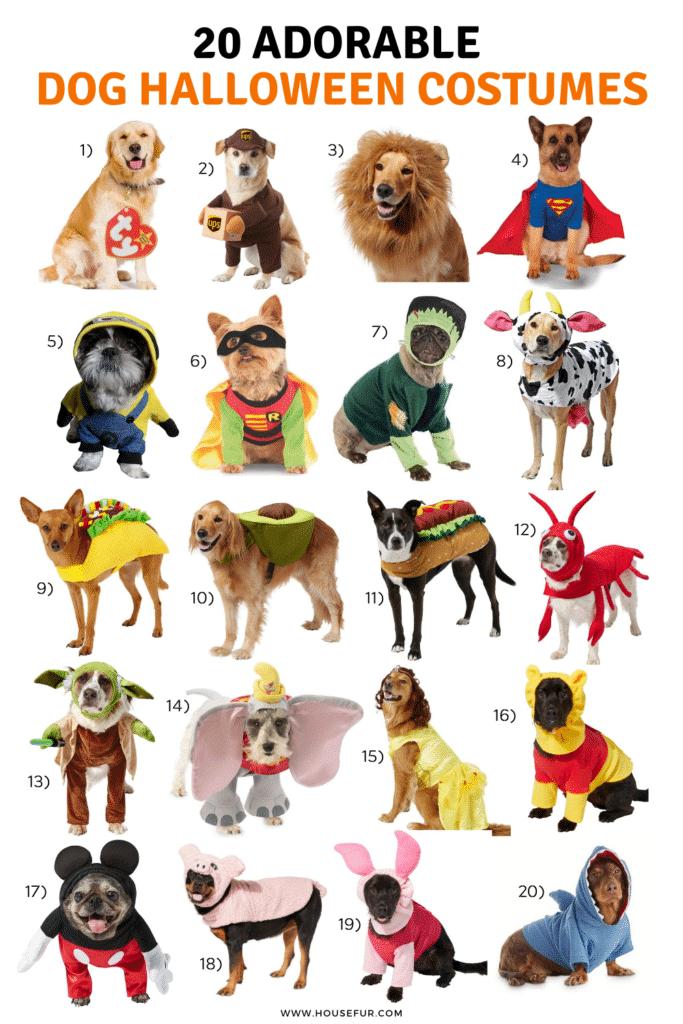 20 dog halloween costumes